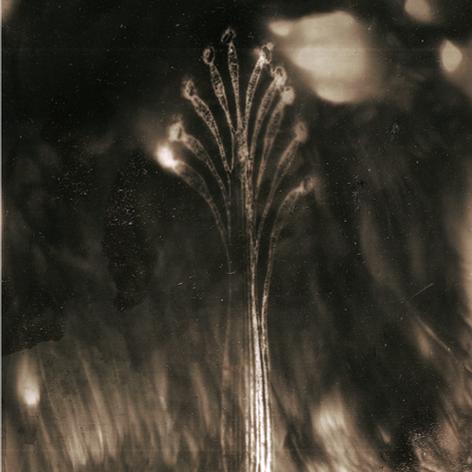 Tchernobyl Herbarium - #AT08 par Anais Tondeur