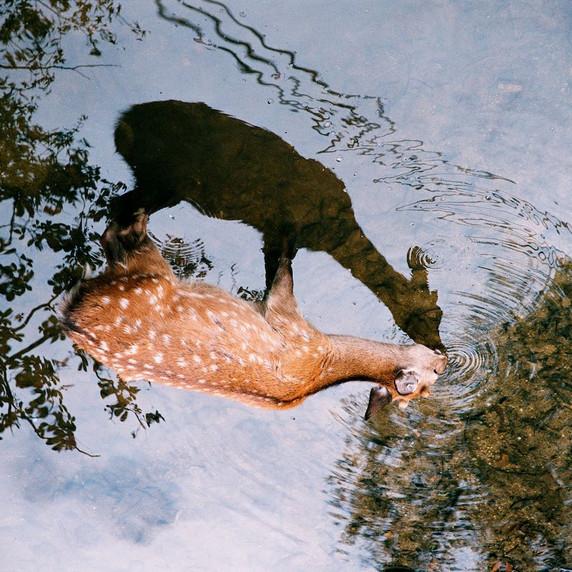 Nature - CDR02 par Charlotte de Rosnay Copier