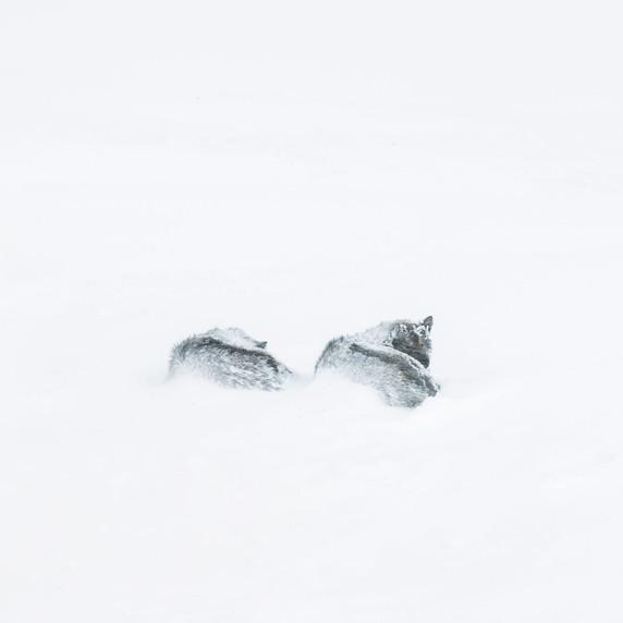 Sibérie - CV05 par Corinne Vachon
