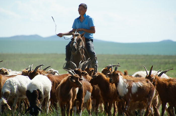 Tissu Fratelli Tallia Di Delfino - Mongolia.jpg