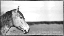 Mono Horse Portrait