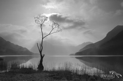 Buttermere Tree