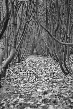 Trees Mono