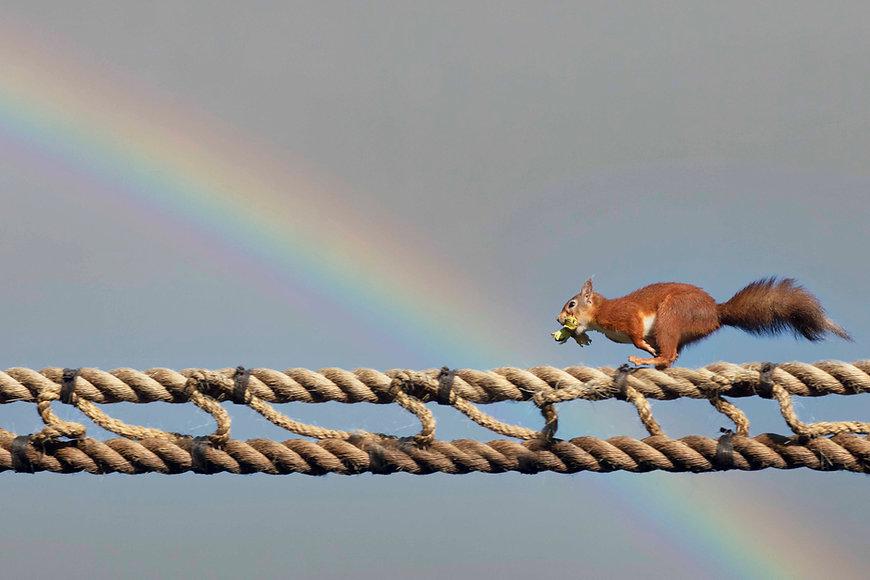 Rope2.jpg