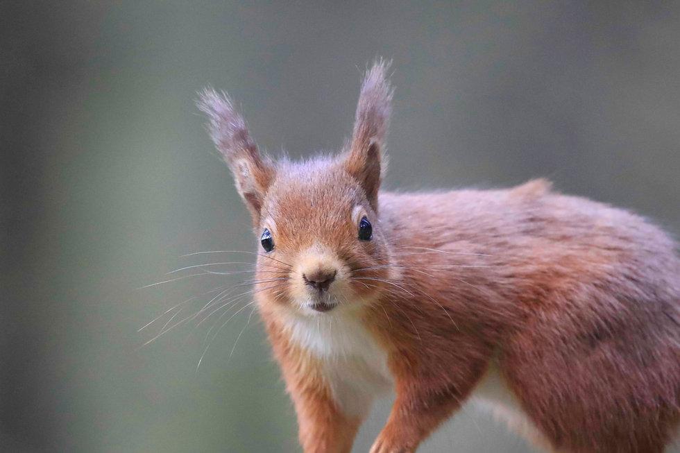 Squirrel dec.jpg