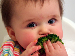 FUSSY EATING AND FOOD REFUSAL:    Is It  Due to a Sensory or Oral Motor Difficulty?