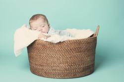 Henry in basket