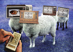 sheeple tvs