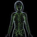 the_lymphatic_system.jpg