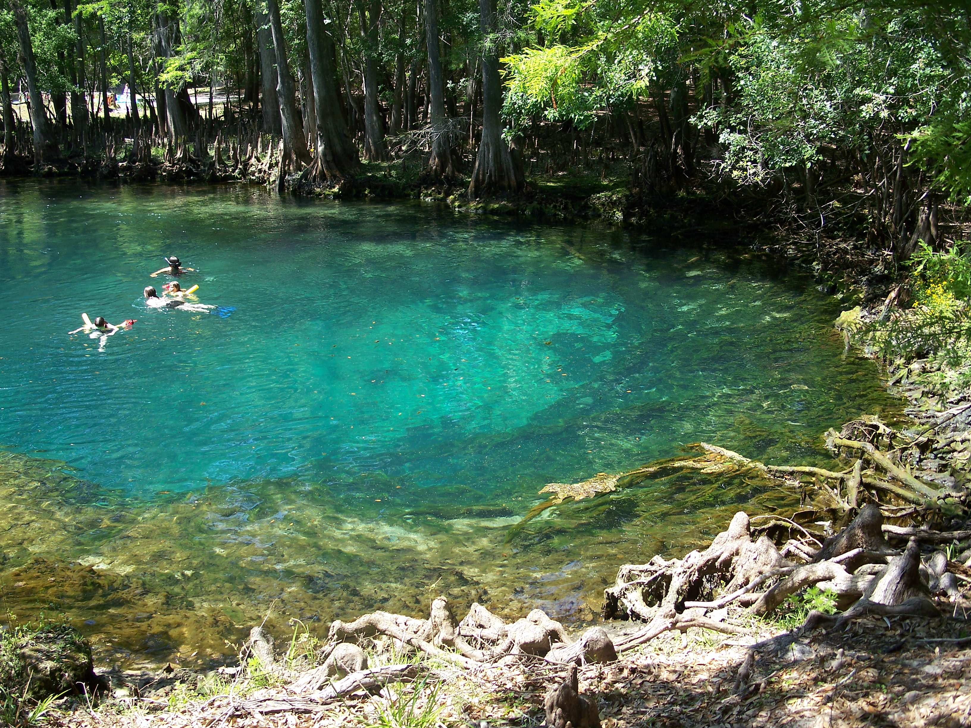 Manatee_Springs_State_Park_Florida_springs04