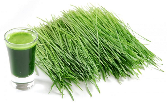 health-benefits-of-wheat-grass.png
