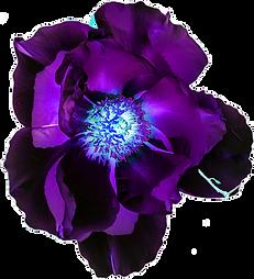 Bliss Flower