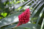 DSC_0300 small.jpg