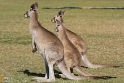 2013 Australie