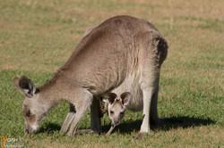 2013_Australie