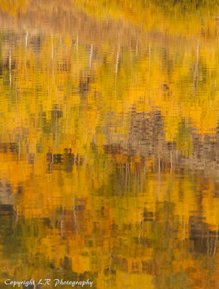 Autumn Reflections, Aspen & Sage