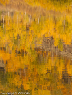 Autumn Reflections, Aspen & Sage