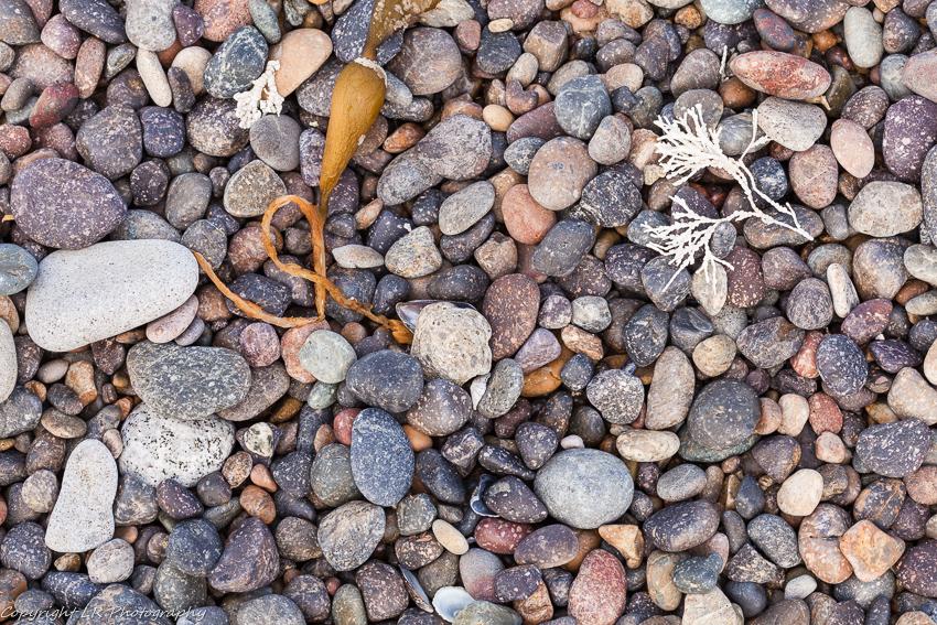 Kelp & Pebbles