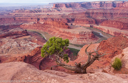 Colorado Canyons, Dead Horse Point