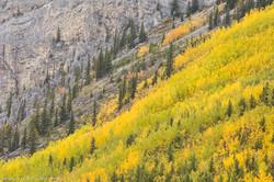 Aspen & Spruce, Autumn