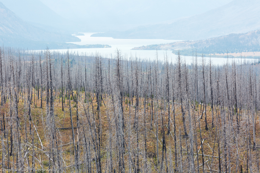 Burned Forest,  Afternoon Haze