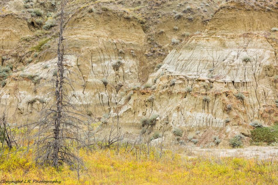 Autumn, Horseshoe Canyon