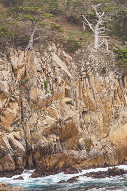 Cliff & Coastal Forest