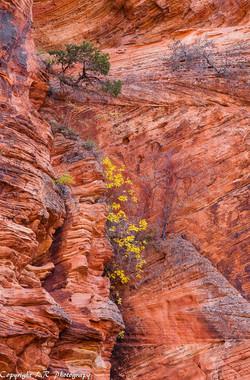 Canyon Walls, Autumn