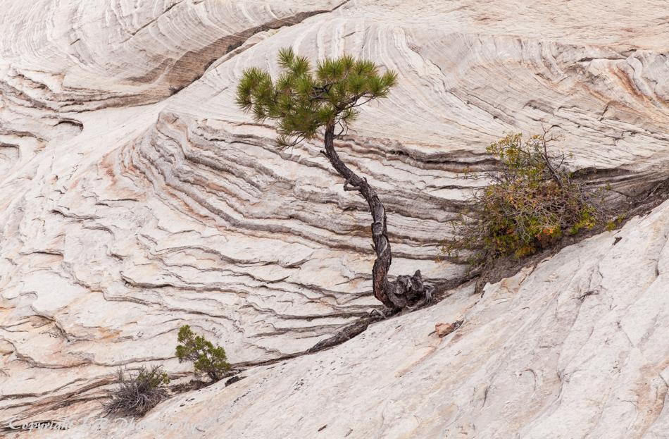 Layered Sandstone, Oak & Pine