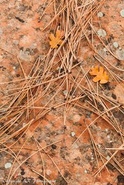 Pine Needles & Oak Leaves