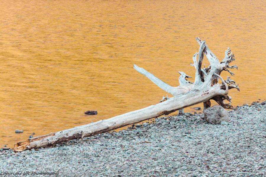 Driftwood, Sunrise