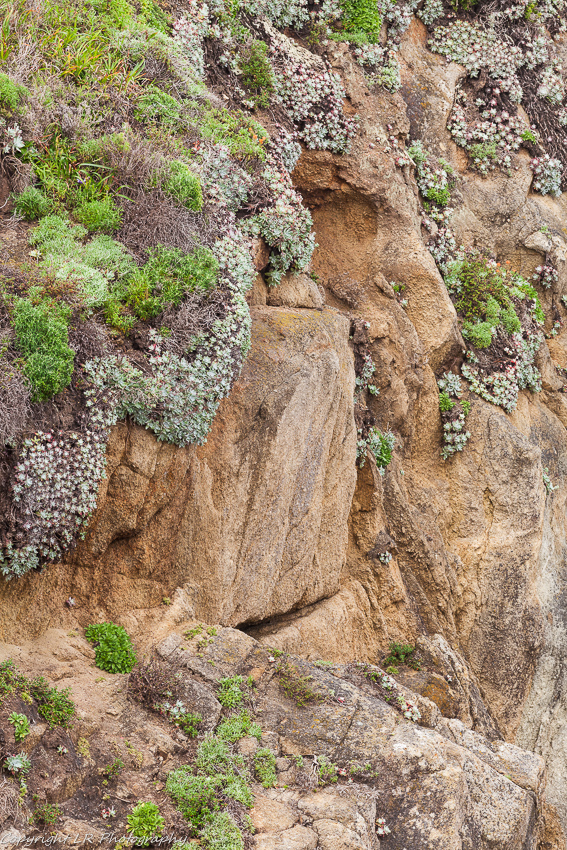 Weathered Granite, Bluff Lettuce