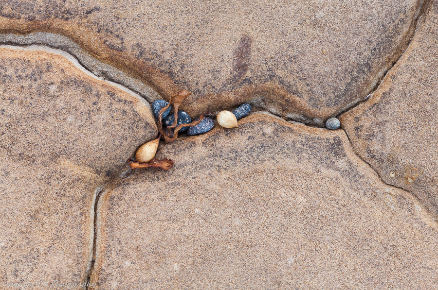 Eroded Sandstone, Kelp & Pebbles
