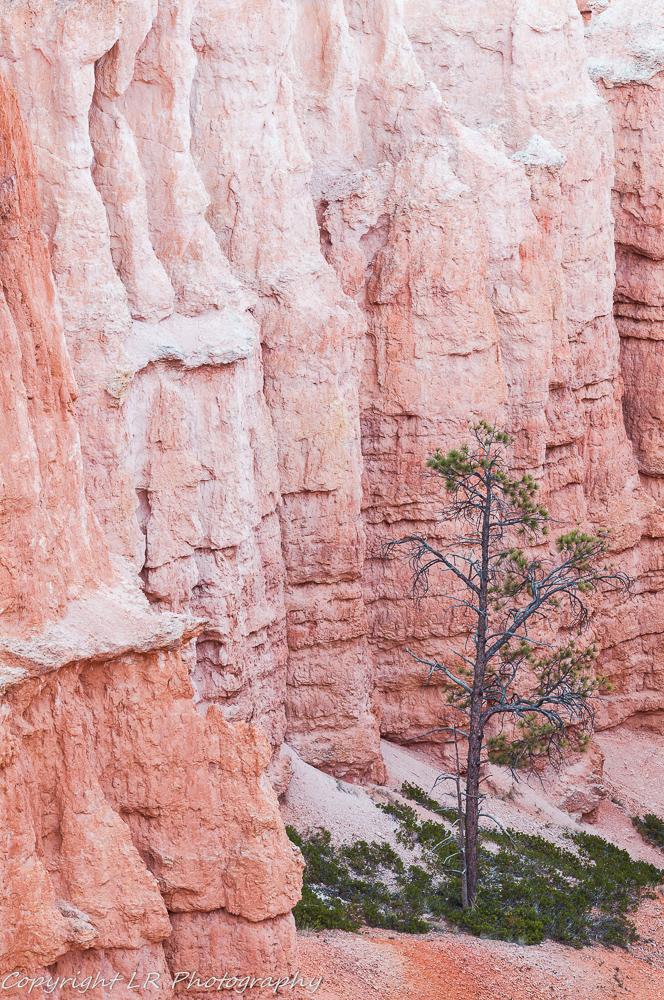 Columns & Pine I