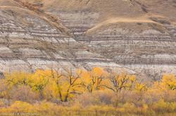 CottonWoods, Autumn, Bablands Hills