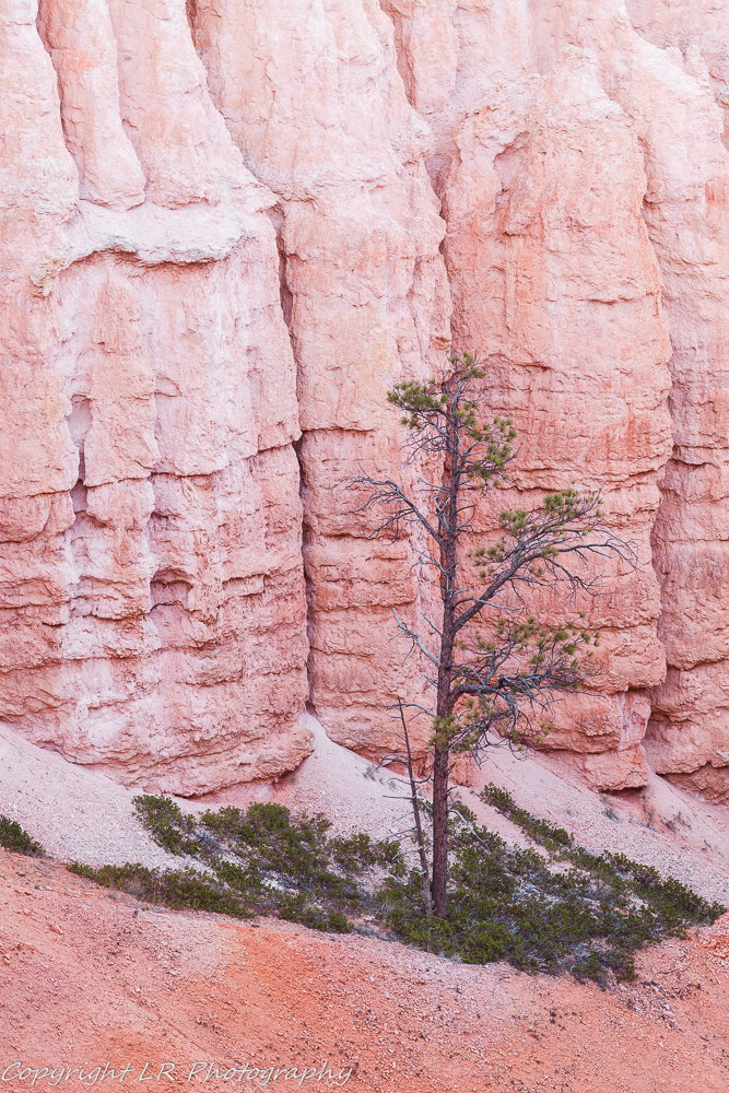 Columns & Pine II