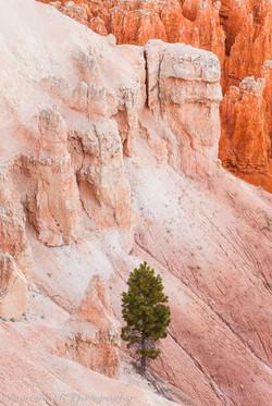 Lone Pine & Hoodoos