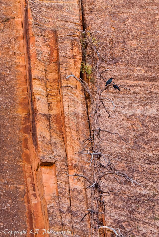 Sandstone Cliff, Snag & Ravens