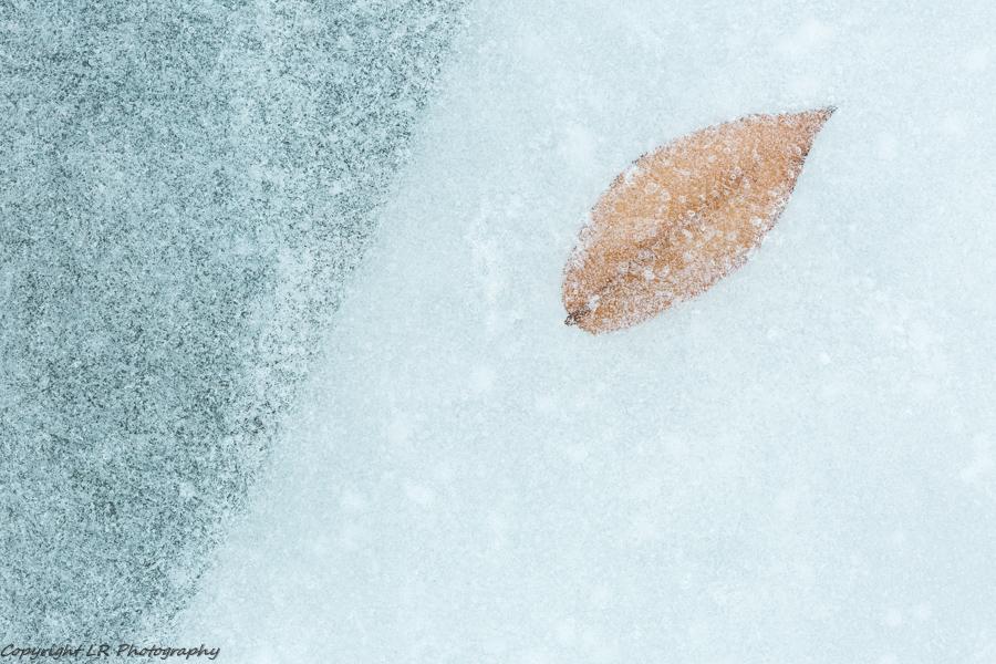 Leaf, Frozen Creek
