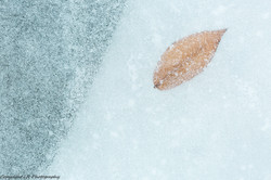 Leaf, Frozen Creek