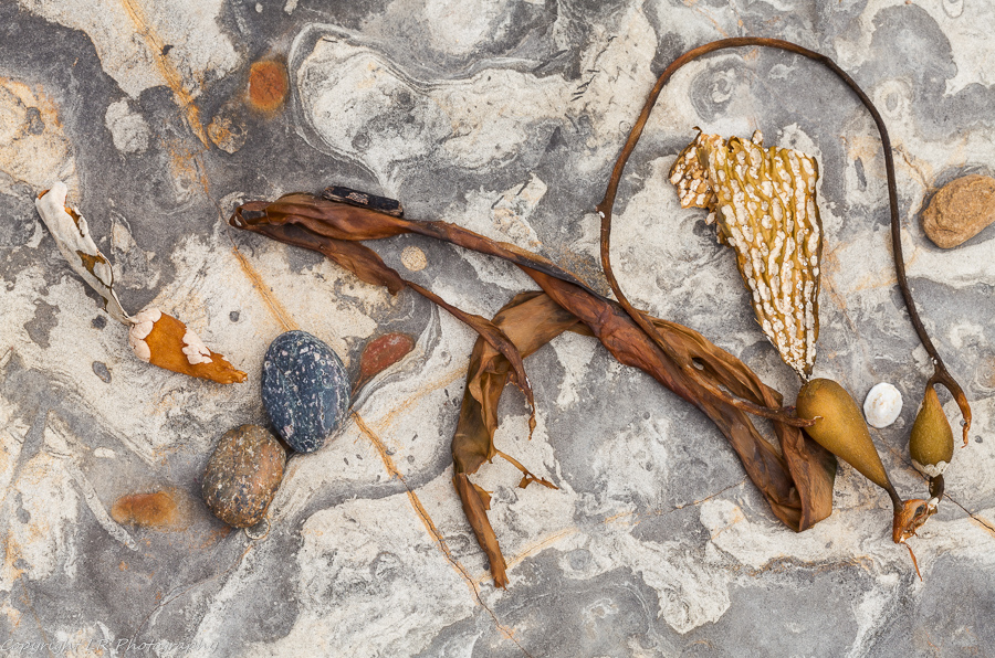 Mudstone, Kelp & Pebbles