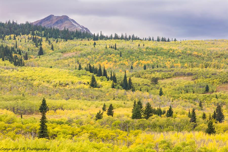 Aspen & Conifer Covered Hillside