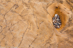 Trace Fossils, Sandstone, Pebbles