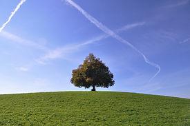 Baum Front.jpg