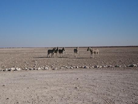 KEIN REIBKAESE IN NAMIBIA