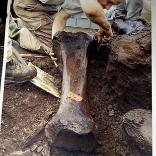 Mammutknochen - oder doch der Beinknochen eines Riesen?