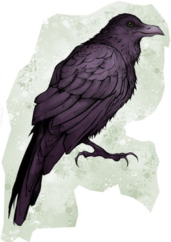 crow of the night