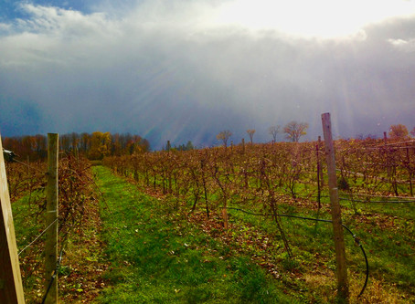 There's Nothing Like a Walk Through the Vineyard in Autumn