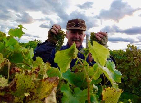 Autumn at Northern Sun Winery