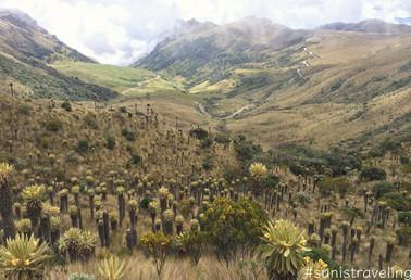 Los Nevados國家公園